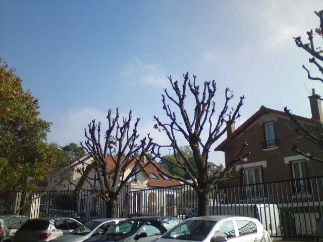 Elagage des arbres, après