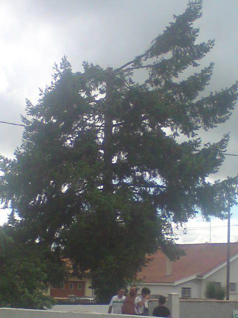 Etetage arbre 94, après