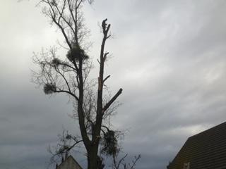 abattage arbre 60 (Oise) Thourotte
