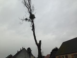 abattage arbre dangereux 60 (Oise) Thourotte